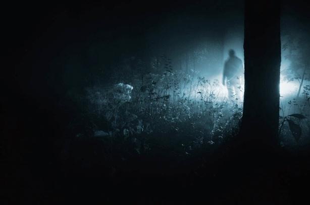 sombras-en-el-bosque-201981